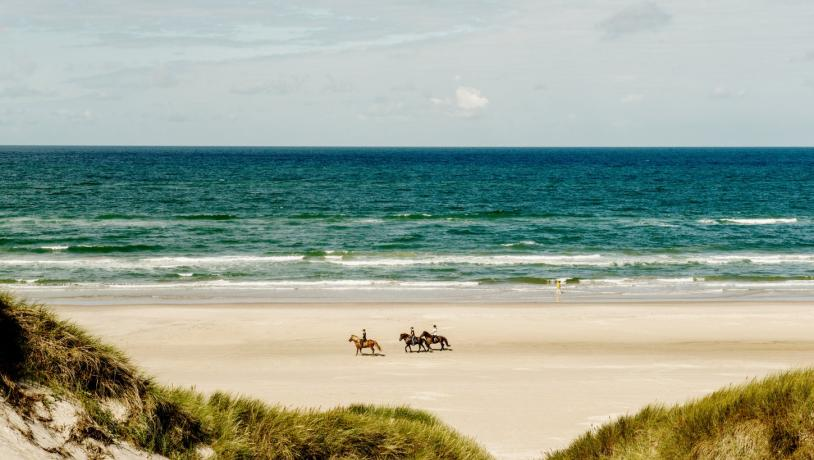 Horses at Blokhus Beach