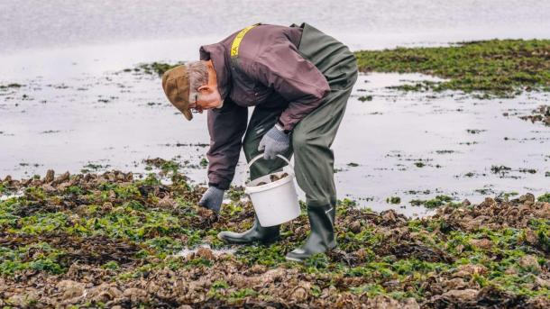 Campaign - Gastro: Østers - Man picking up oysters