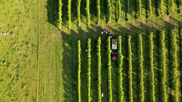 Campaign - Gastro: Vin - Vinyard from above